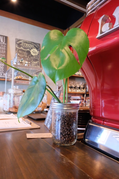 Plant by Espresso Machine at Woodberry Coffee Roasters in Yoga Tokyo Japan